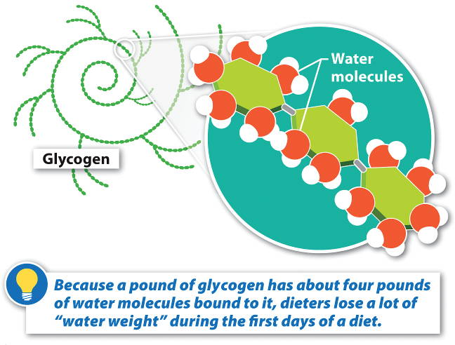 Dehydration Reaction Diagram Chemical reactions involve the